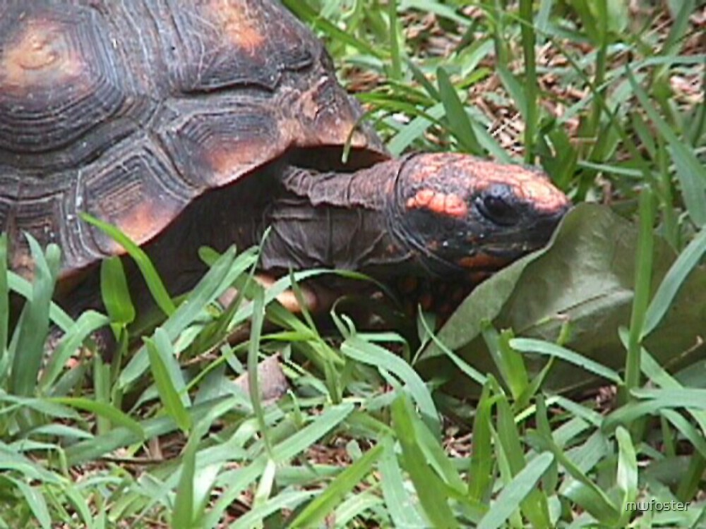 turtle by mwfoster