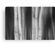 Aspen Tree Colonies Dreaming BW Canvas Print