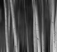 Autumn Aspen Trees Dreaming BW by Bo Insogna