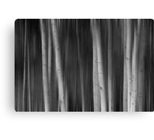 Autumn Aspen Trees Dreaming BW Canvas Print