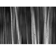 Autumn Aspen Trees Dreaming BW Photographic Print
