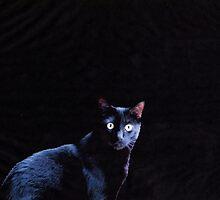 Cat in Black by vwrites