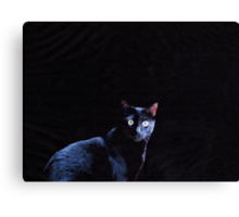 Cat in Black Canvas Print