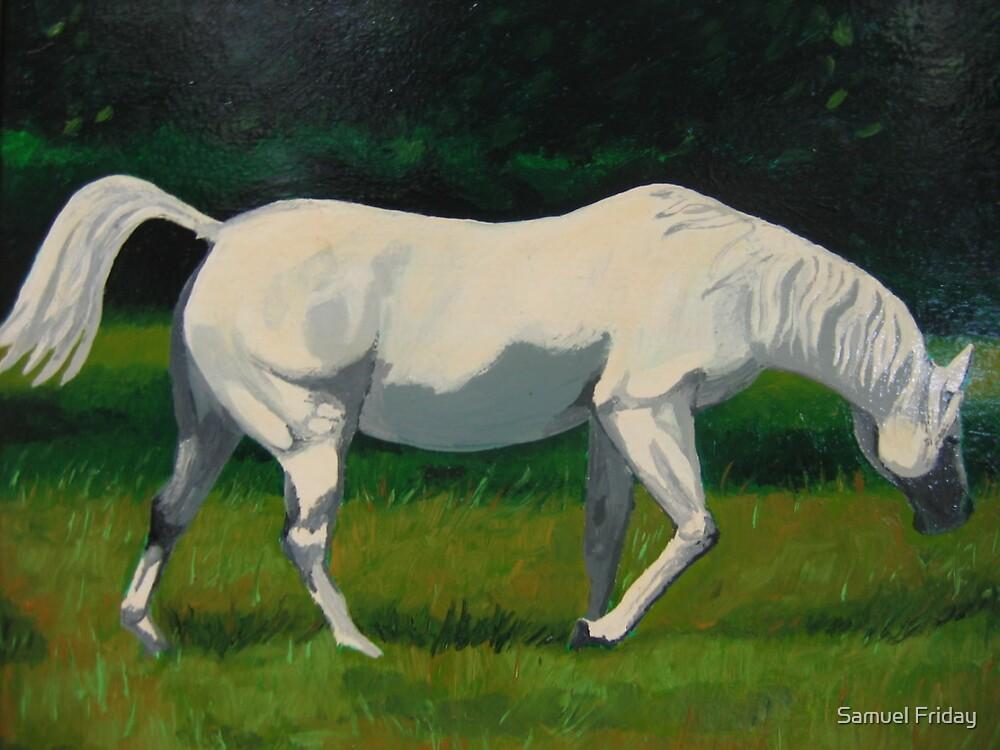 white horse by Samuel Friday