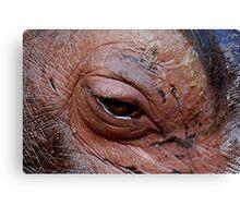 Hippopotam....eye Canvas Print