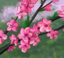 Spring Blossoms by Scott Meyer