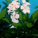 Frangipani Butterfly by Cary McAulay