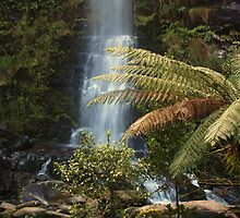 Ottway National Park Waterfall by Bronwyn  Faulder