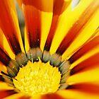 Orange Burst by moseszap