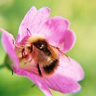 Bee by moseszap
