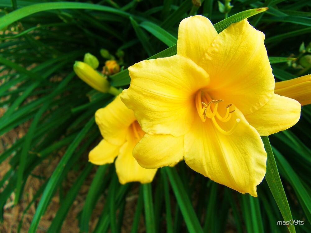 Flowers by mas09ts