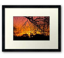Salix Tortuosa (tortured willow) at Sunset. Framed Print
