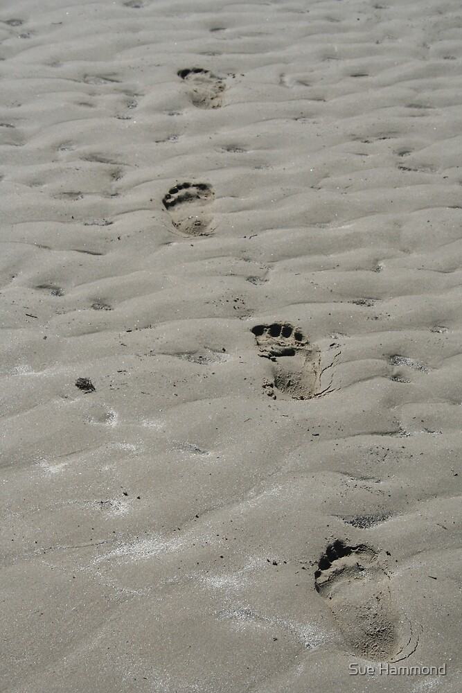 Footprints by Sue Hammond