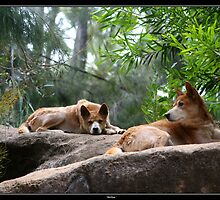 Rok Dogs by Dave  Grubb