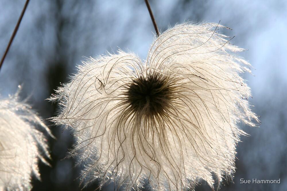 Fluffy by Sue Hammond