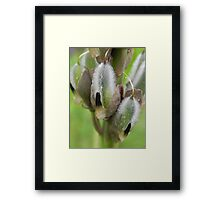 Lupin Going To Seed Framed Print