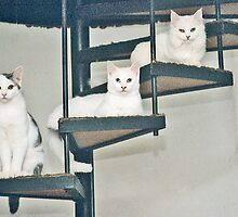 Three cats on stair by newlees
