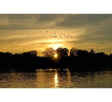 Sunset with Geese Photographic Print