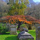Pretty Tree in a Churchyard.. by lynn carter