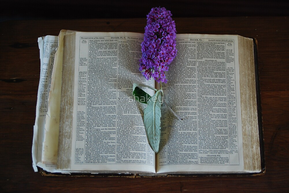 Bible and bloom by shakey