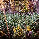 Beautiful Fall Foliage In The Forest by MissDawnM