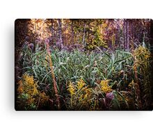 Beautiful Fall Foliage In The Forest Canvas Print