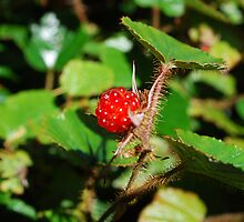 Raspberry by shakey