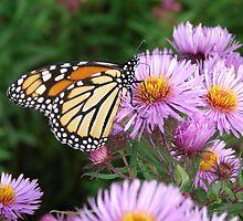 Butterfly on Purple by Martha Medford