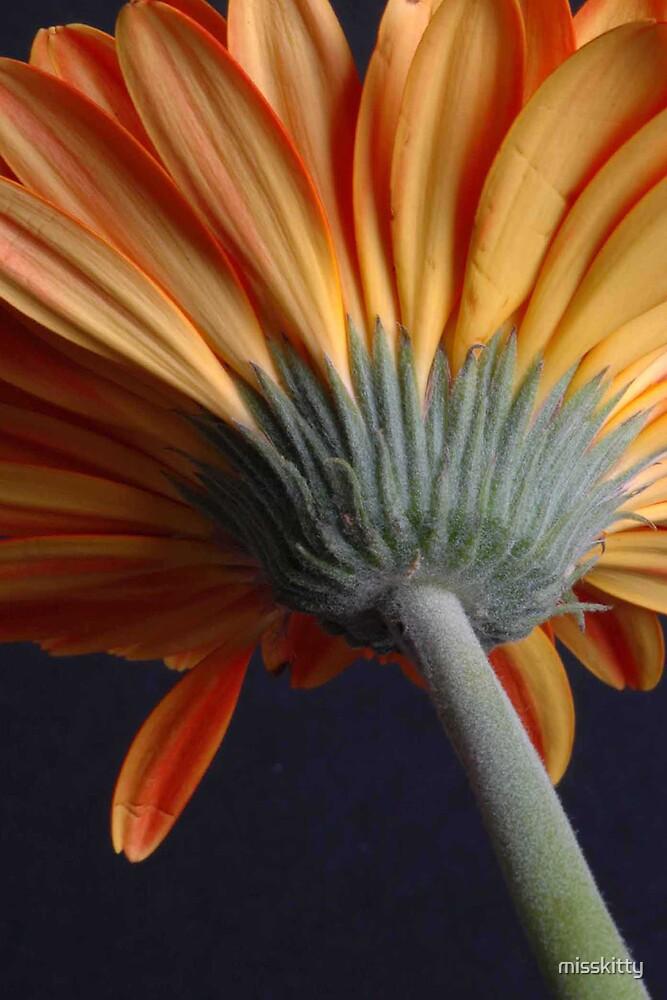 underside of a flower by misskitty