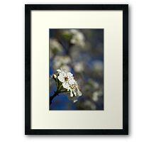 White Macro Flower Framed Print