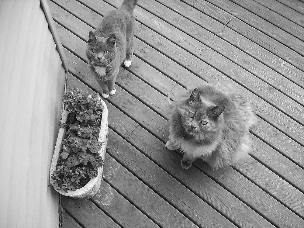 My Beautiful Cats by qbug