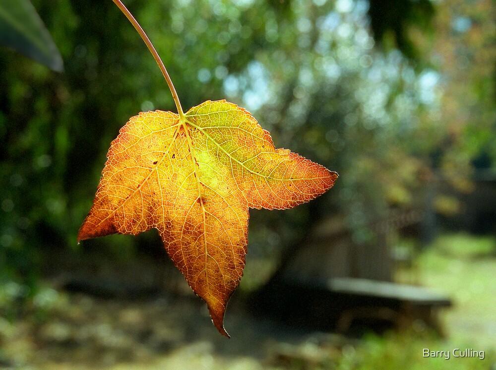 Backlight leaf by Barry Culling