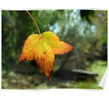 Backlight leaf Poster