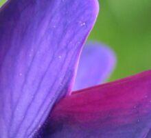 Purple Lupin Close Up Sticker