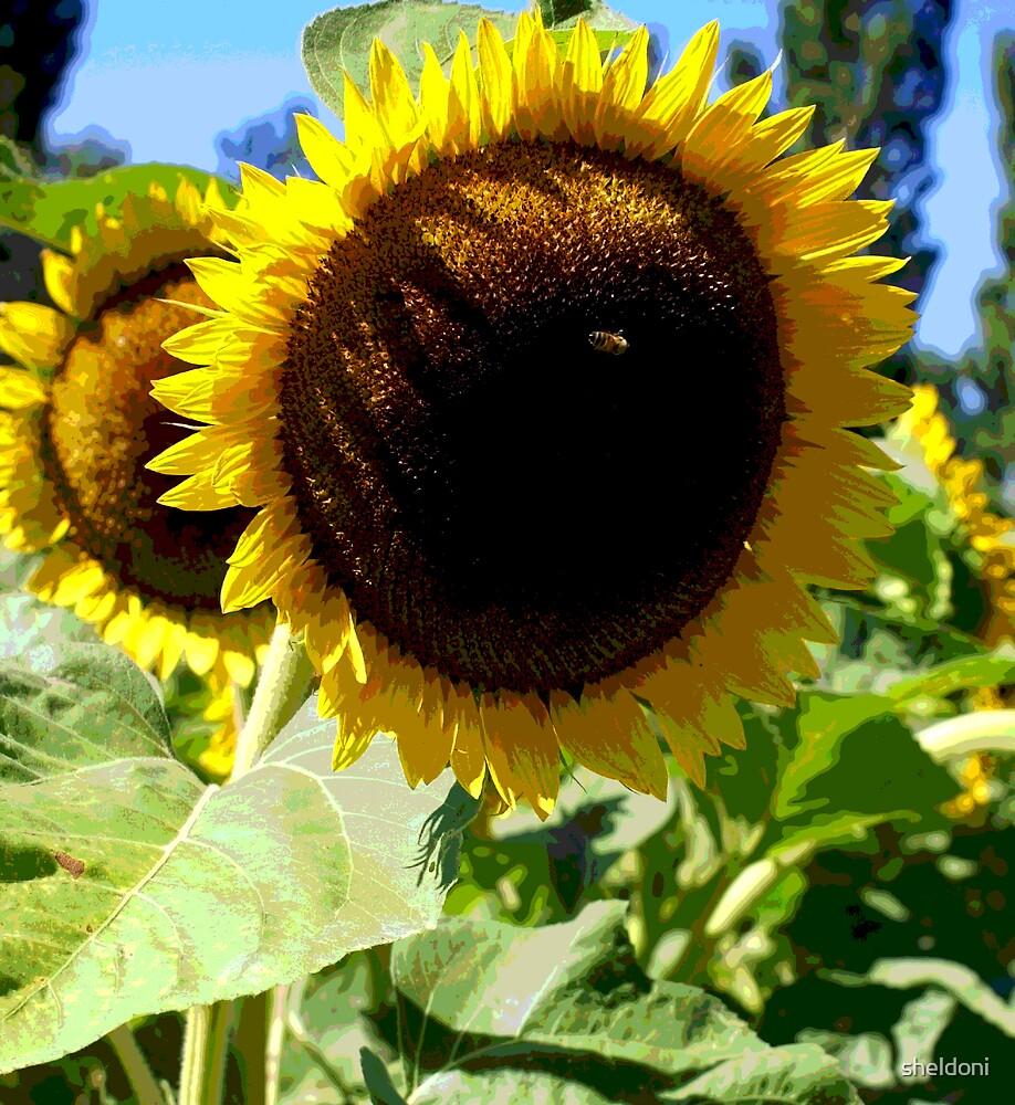 """""""Sunflower Fields Forever"""" by sheldoni"""