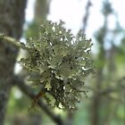 Lichen Pop by Martha Medford