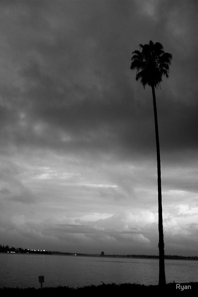 Winter Palm by Ryan