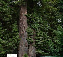 Immortal Tree by Lori Gerdes