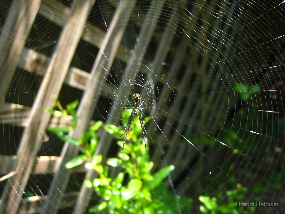 Spider In My Back Yard by Brandi Baldwin