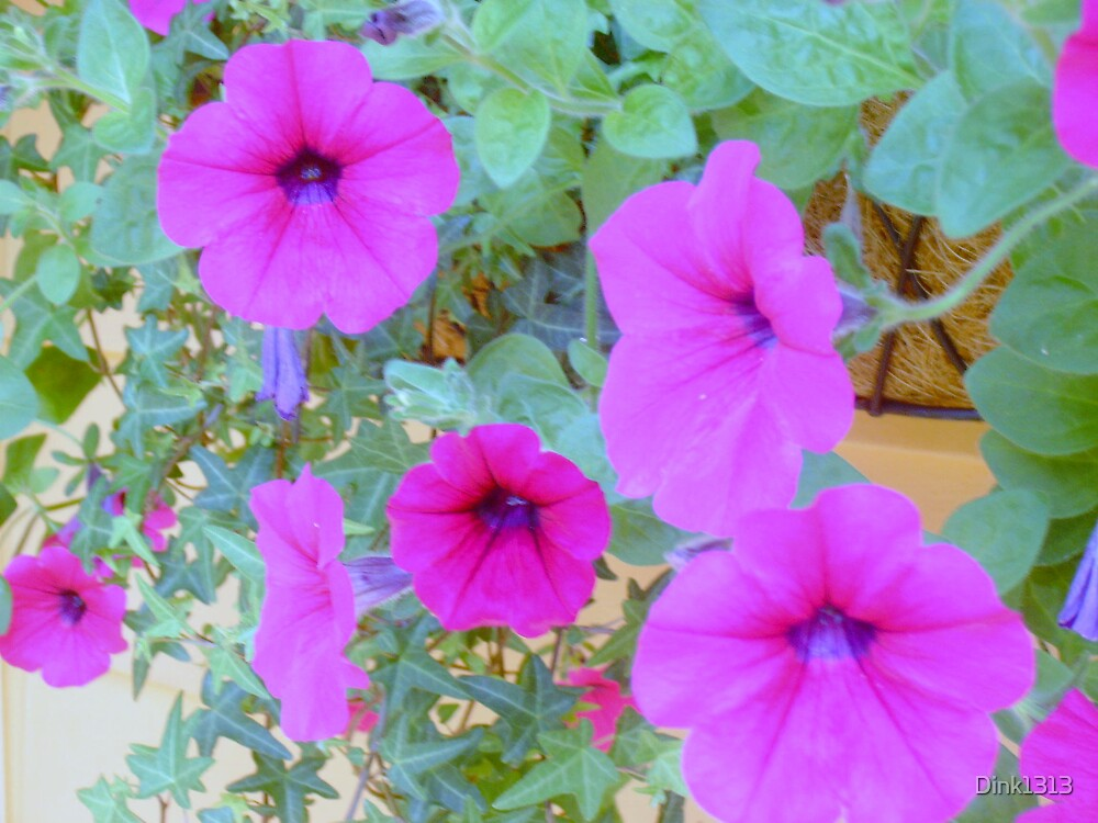I can't believe the vibrant color of these flowers by Dink1313