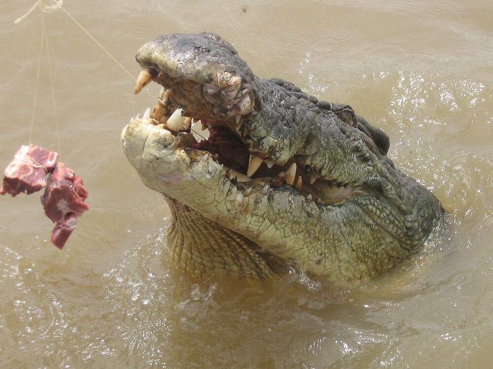 Wild Crocodile by austhome