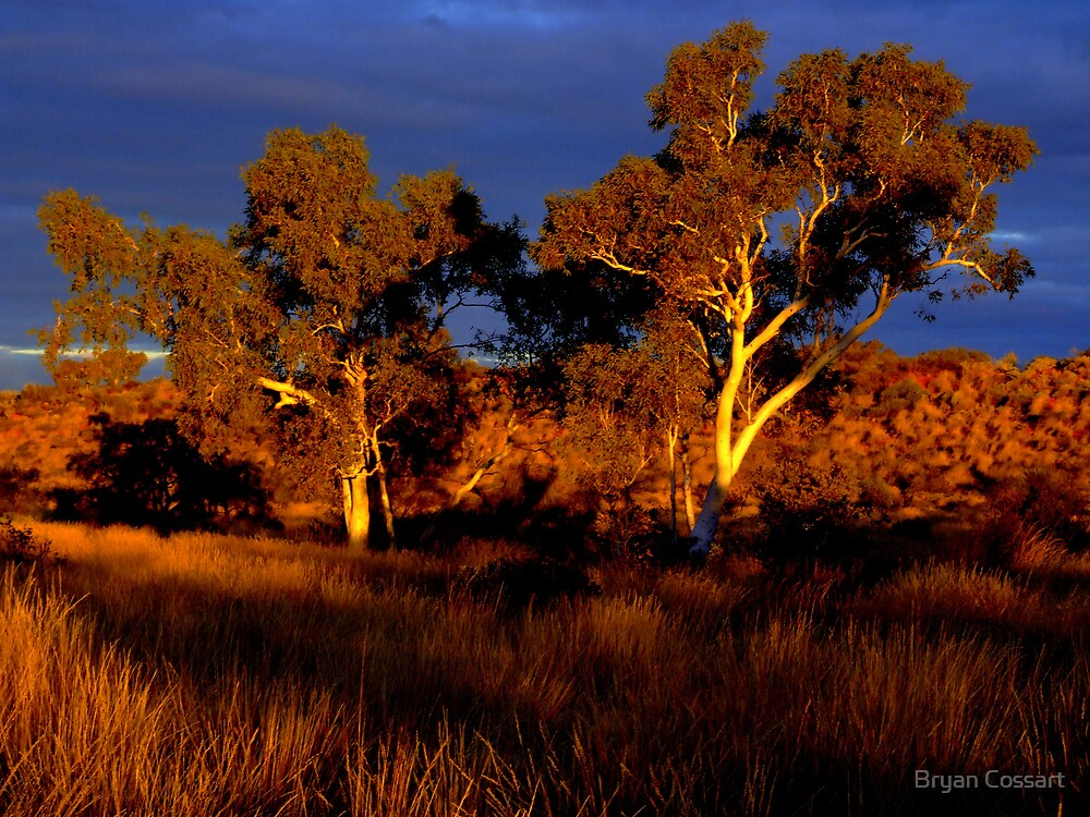 Sunset Trees by Bryan Cossart