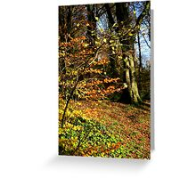 Killynether in the Autumn Sun....1 Greeting Card