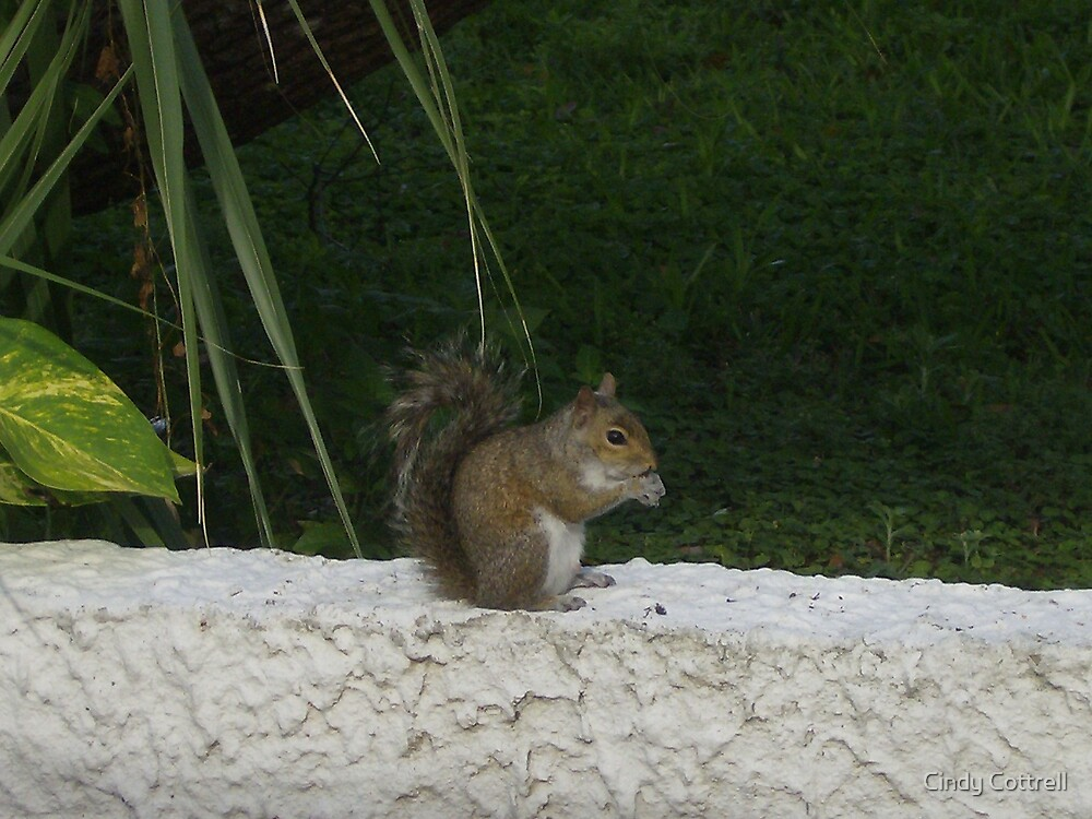 Just A Squirrel Tryin To Get A Nut!!! by Cindy Cottrell