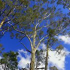 Gum Tree's and Blue Sky by Leone