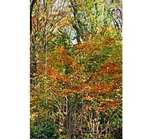Killynether in the Autumn Sun....2 Photographic Print