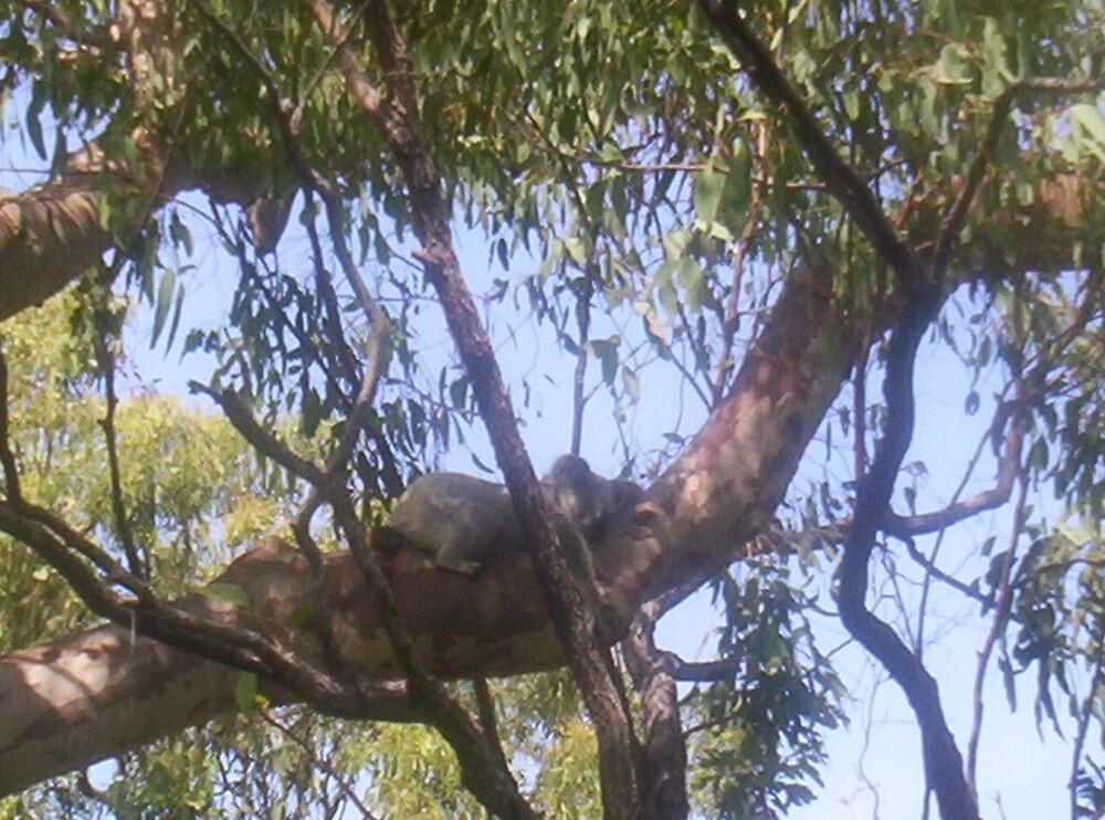 A typical Australian Day by gemqtpie