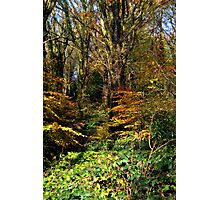 Killynether in the Autumn Sun....3 Photographic Print