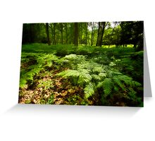Sea of Ferns. Greeting Card