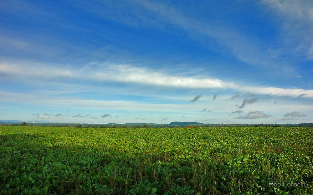 Shropshire Landscape. by Rob Corbett
